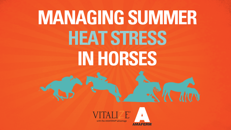 Tips for Summer Heat Stress