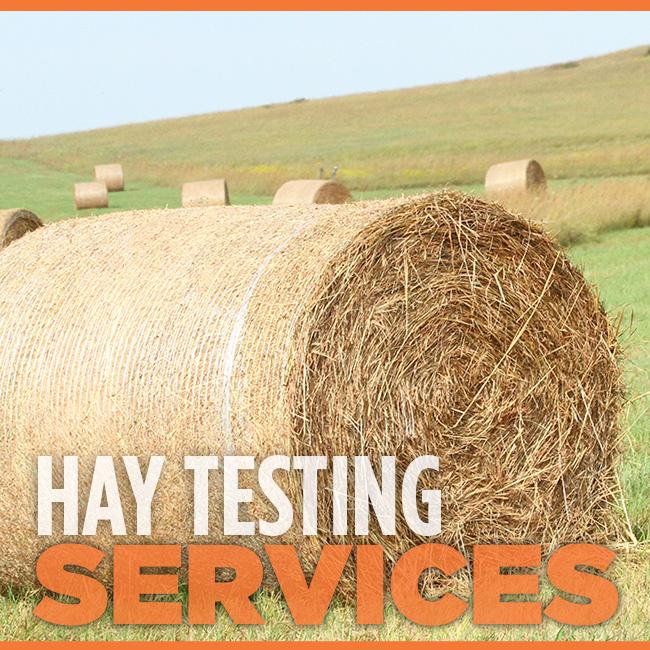 Hay Testing