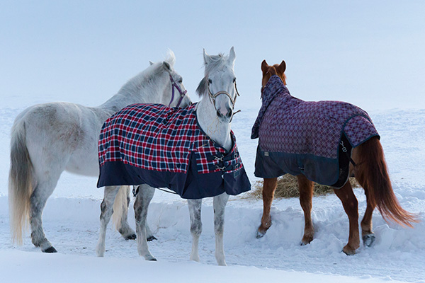 Turnout Blanket Group
