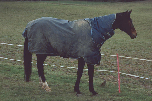 Turnout Blanket with Neck Piece